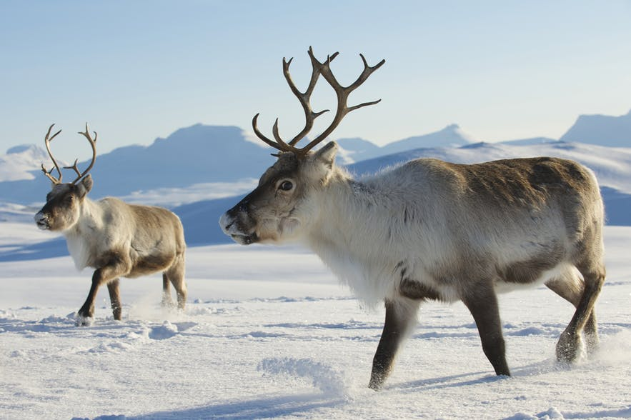 Wildlife & Animals in Norway