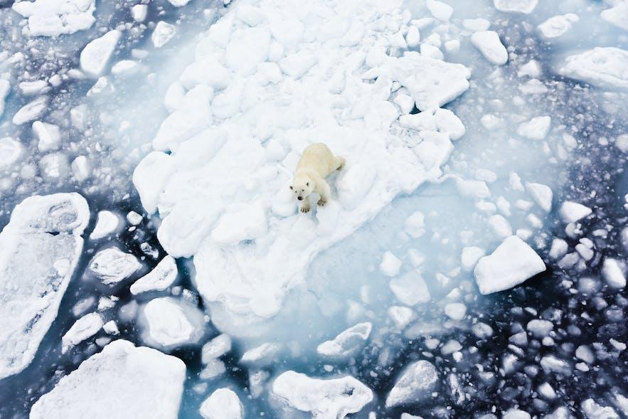 Wildlife & Animals in Norway
