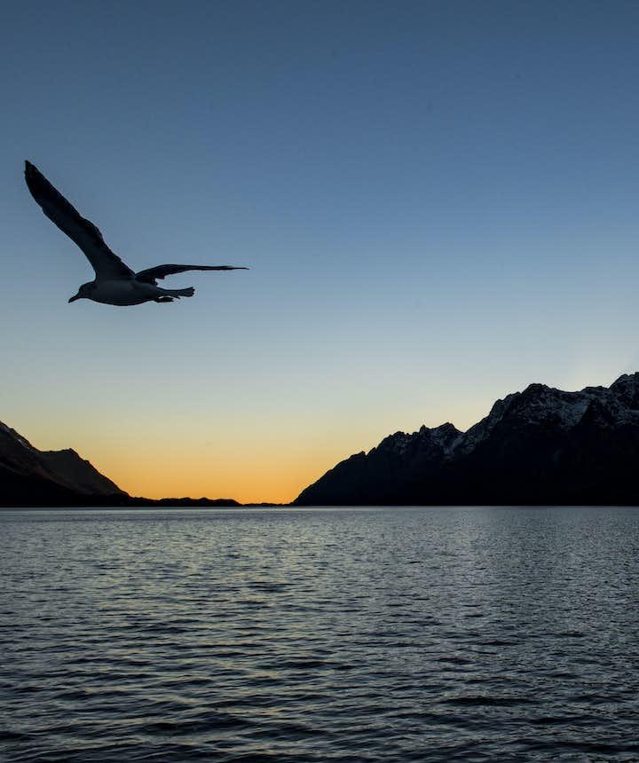 Seagull_4785.jpg
