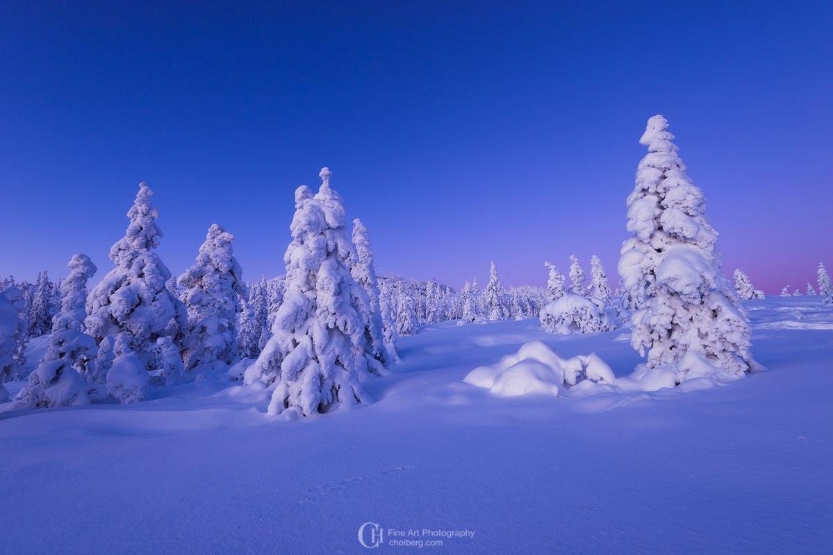 Winter Bluehour