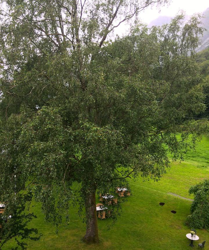 Mystical happenings in the Norwegian valley!