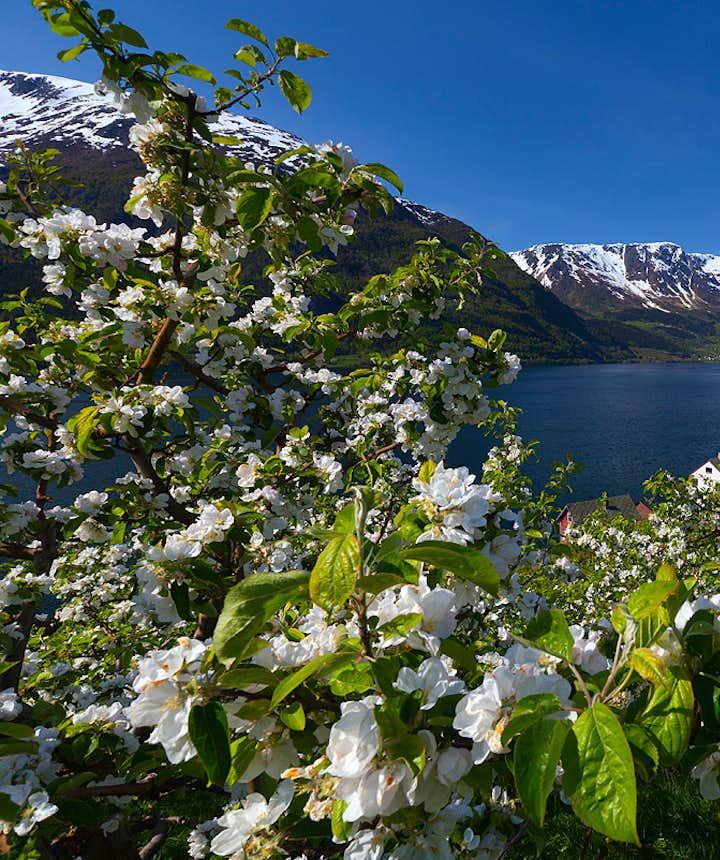 Beautiful Hardanger spring