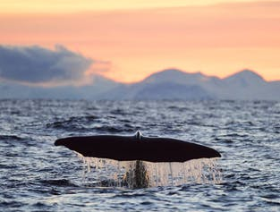 Winter Whale Watching width=