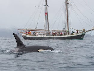 Whale Watching | Silent Vessel