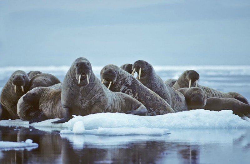 8 Day Svalbard Sailing Expedition - day 6