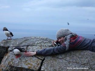 Round Trip to Runde Bird Island | Alesund Tours
