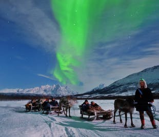 Northern Lights and Reindeer Sledding with Sami Guides
