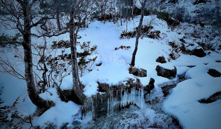 Snowshoe Hiking Tour with Beautiful Nature in Bergen